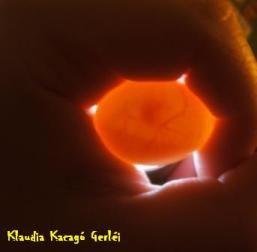 kacagó embrió a tojásban