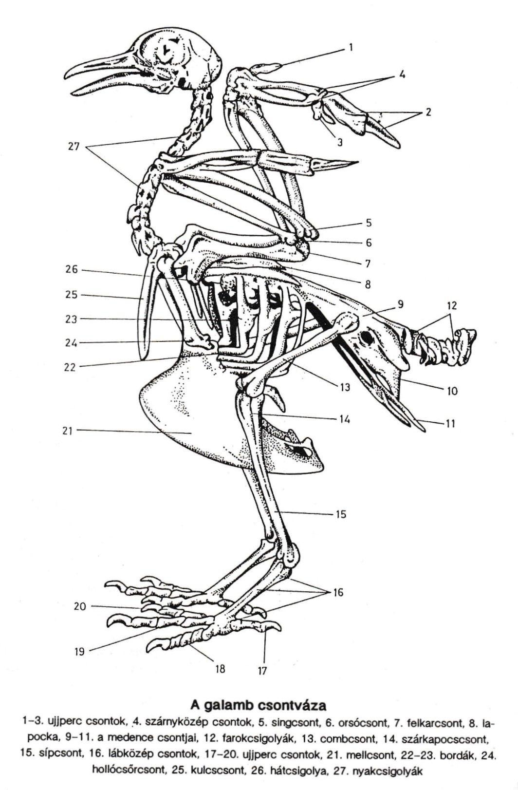 öko vékony galamb si trova reiki szimbólum fogyás