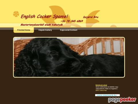 Englishcockerspaniel - English Cocker Spaniel