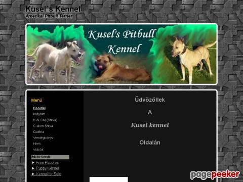 Kuselkennel - Pitbull Terrier